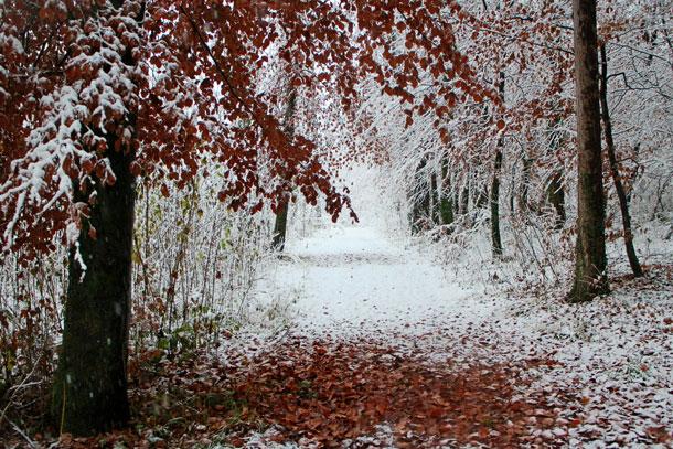 Winter walk | Canon EOS M with 18-55mm F3.5-5.6
