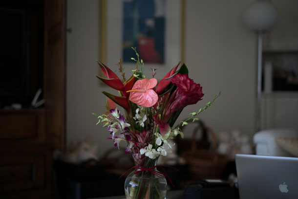 Leica M 240 JPEG @ F1.7 1/750 ISO 320 | Dr. Ulrich Rohde (click image for full resolution JPEG file)