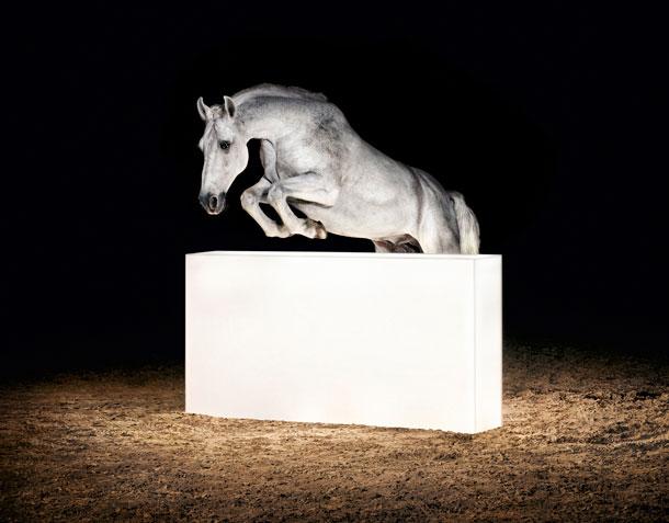 Horse | Gian Paul Lozza
