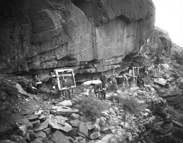 Drudge: Timber was scarce in the Grand Canyon. When the pioneers wanted to build a cabin in the valley, they had to transport the wood on mules down from the top of the canyon, just as farmer William Bass did in this photo of the Kolb brothers around 1906. In a similar manner Emery carried the components for his darkroom in the Indian Garden. | Grand Canyon National Park / Kolb Brothers